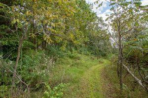 IDX_9L1 Ox Trail Way Photo 9