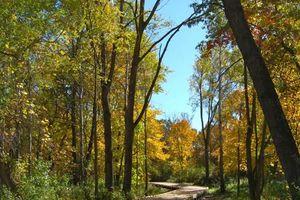 IDX_336722 Conservancy Plaza Photo 33